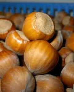 Орехи лещины крупной