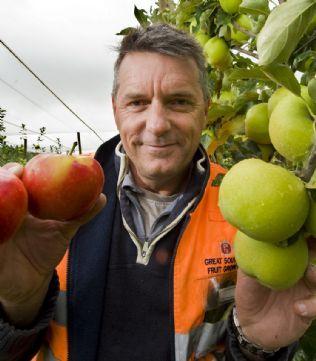 Новые сорта яблок